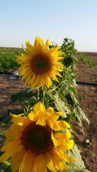 شیربرات روستایی چهار فصل با قدمتی دیرینه